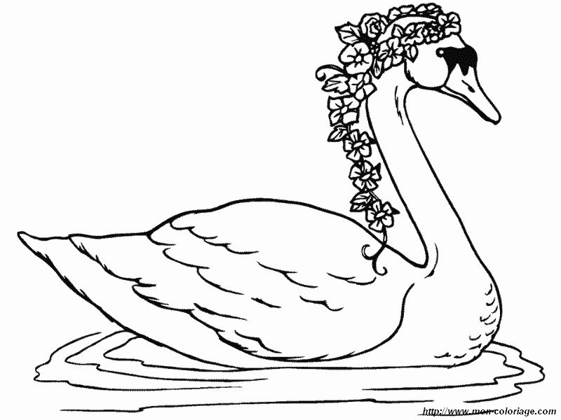 picture swan with flowers