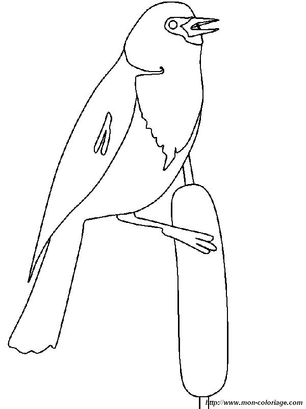 black bird coloring pages - photo#3