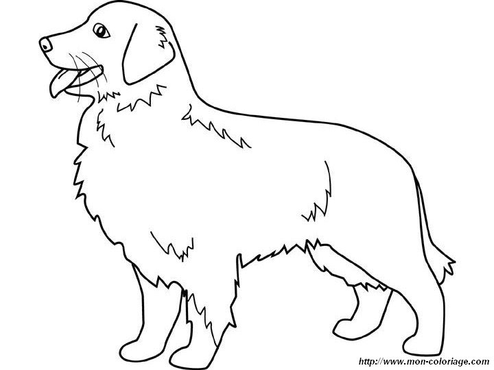 coloring dogs page golden retriever