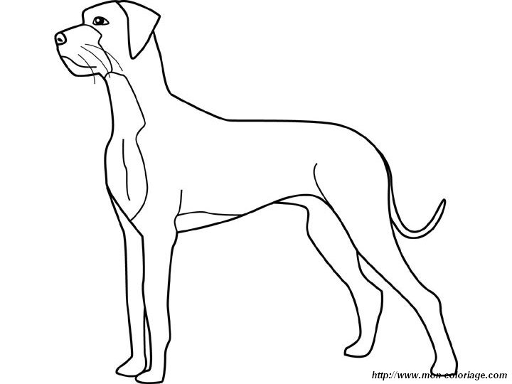 Pin great danes colouring pages on pinterest for Great dane coloring pages