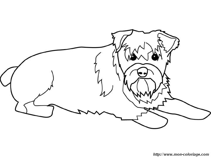 Free Coloring Pages Of Schnauzer Puppy Schnauzer Coloring Pages