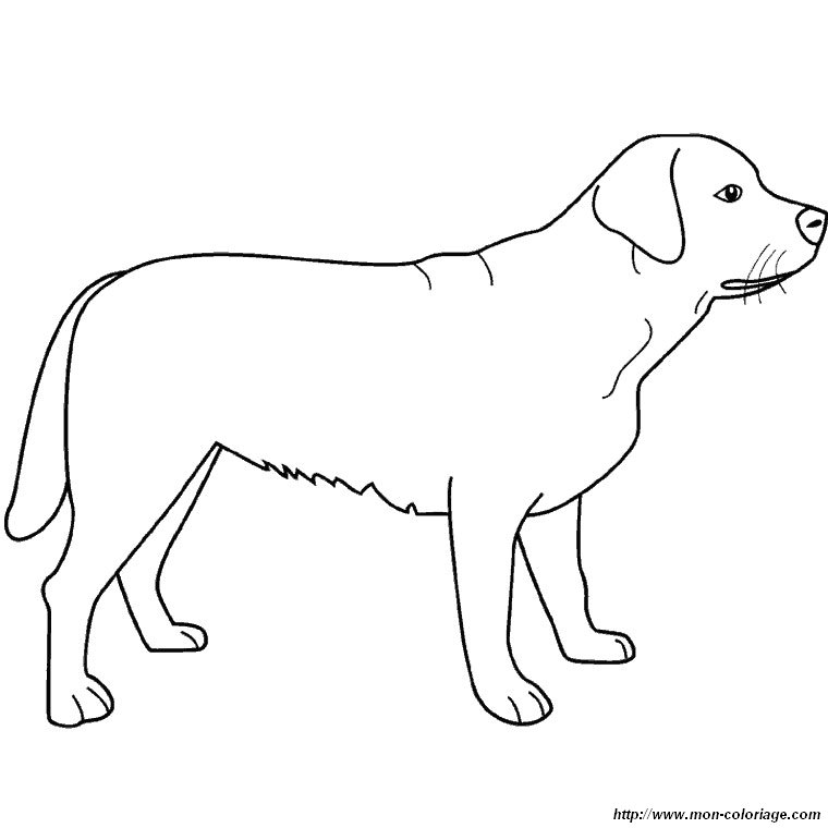 Coloring dogs page standing labrador for Coloring pages labrador