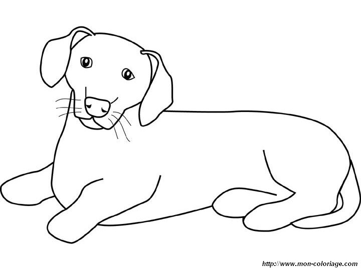 free a weiner dog coloring pages