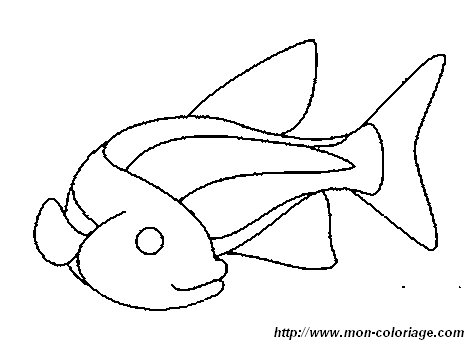 picture fish7