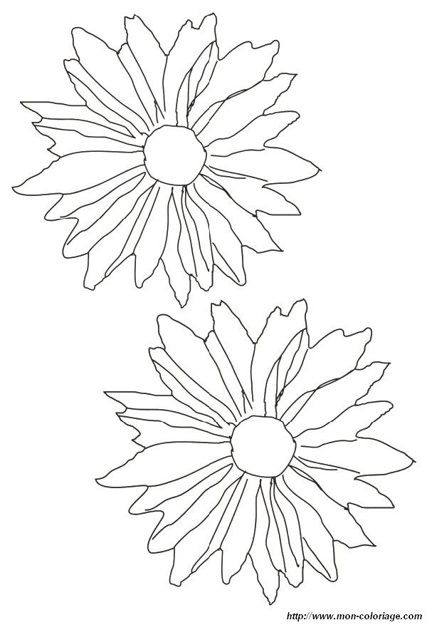 4 Petal Flower Coloring Page Flowers Petals Colouring Pages