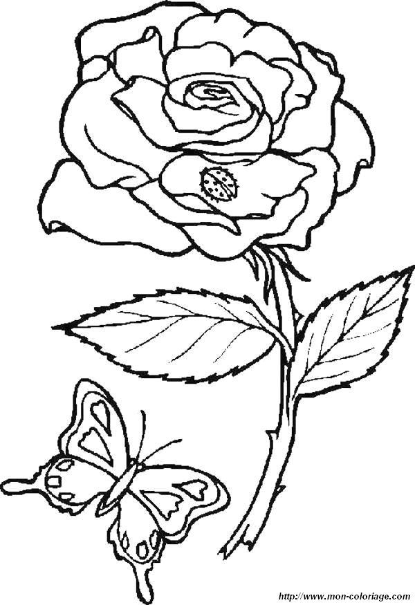picture rose and butterfly