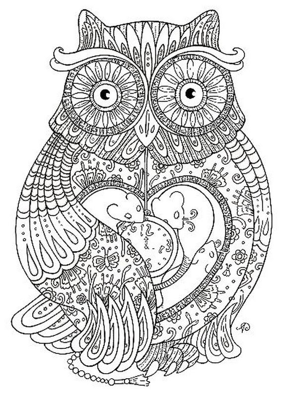 picture A very detailed owl
