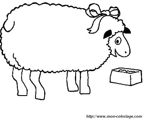 picture sheep